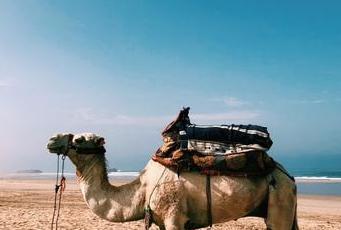 costa Agadir dune sabbia cammelli delfini