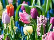 Piantiamo bulbi fiore
