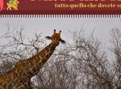 Safari fotografico Parco Kruger, sogno realizzato