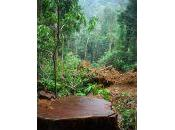 violenze nelle foreste Congo gestione sostenibile