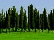 """""""Primavera Borgogna"""" recensito """"Blog Libri""""."""