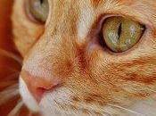 Gatto diabetico curato l'Omeopatia: caso clinico veterinario