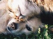 Differenza amicizia amore