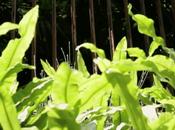 """Sostenibilità: arriva """"giardiniere virtuale"""""""