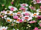 Cura benessere proprio giardino: cosa dietro giardino curato