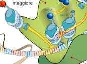meraviglioso incredibile processo microscopico della sintesi proteina
