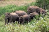 silenziosa rivolta degli Elefanti