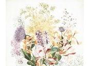 Disegni Botanica