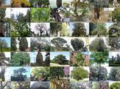 esemplari fotocensimento degli alberi monumentali Florablog!