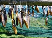 karl squalo putrefatto, piatto islandese