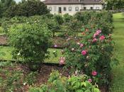 #fioridivenerdì- sabato, domenica lunedì workshop dedicati alle rose peonie