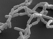 microbi intestinali mangiano nostri farmaci!