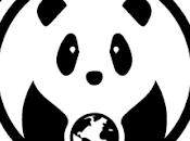 Intervista Rolling Pandas