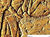 Archeologia. erano quale periodo della storia Mediterraneo dell'antico Egitto, appaiono Shardana? Riflessioni Luisanna Usai Piero Bartoloni