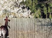 Zoo-safari Dvur Kralove: tocco d'Africa alle pendici Monti Giganti