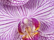 Come coltivare orchidee casa