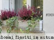 Mettiamo fiori nostri balconi