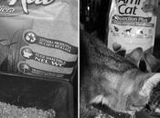 Gatti impatto