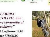 solo grazie Dottore Agronomo Antonio Guario possibilità combattere lebbra dell'olivo