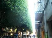 Ficus Sardegna