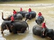Chiang mai: elefanti orchidee