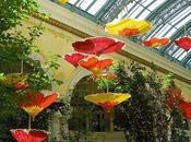 paper umbrellas_Bellagio Botanical Gardens