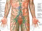 Gonfiori edemi sistema linfatico: come pulirlo
