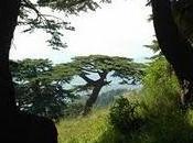 Ecoturismo Libano: foresta cedri millenari