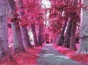 Profeti sono centenari alberi pino Sacerdoti eucaliptos.