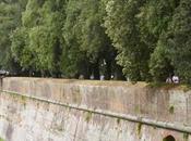 cronaca mostra giardinaggio: Murabilia