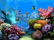 Acquario come Screensaver Desktop