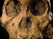 L'Australopithecus sediba contro Darwin, neo-darwinismo gradualismo