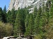 gita allo Yosemite National Park: