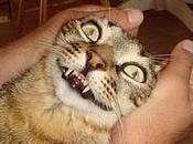Roba gatti: Lillo, gatto prestito
