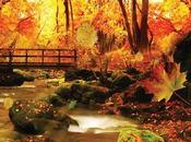 Live wallpaper Sfondo animato Android Autumn Autunno