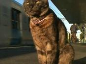 Graeme, gatto accompagna padrona alla stazione
