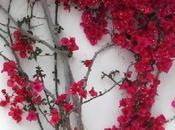 Schiaccia qualsiasi fiore, pianta