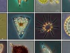 scomparsa fitoplancton