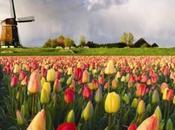 ROMANIA: guerra tulipani. L'immaturità Bucarest