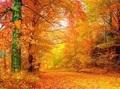 Perché foglie delle piante sono verdi autunno ingialliscono?