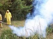 Emergenza dengue: milioni casi, epidemia senza fine