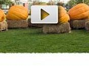 Google festeggia Halloween logo Video