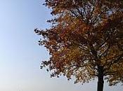 Berlino Tempelhofer Park
