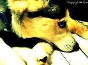 L'amore cane