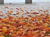 Visioni d'autunno Lago Maggiore.