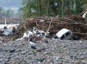 Disastro alle cinque terre: pini erano malati potevano essere curati
