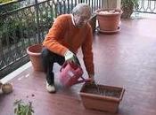 Coltivare aromatiche casa