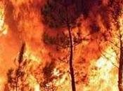 Etna Gardening aderisce alla campagna antincendio 2010