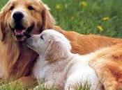 Regole Leggi possiede animale domestico