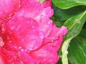 pioggia giardino: haiku fiore